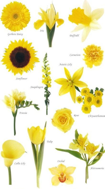 if you're wanting any yellow flowers to match with yellow necklaces!   A really useful guide for putting your bouquet together: YELLOW