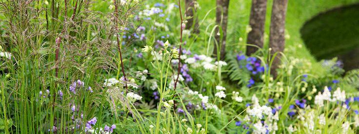 Find a garden at RHS Chelsea Flower Show 2013 / RHS Gardening