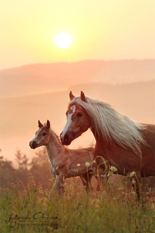 The best things in life! Mare and foal by Dawn Katarzyna Okrzesik, Poland