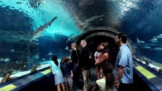 The Aquarium in Atlantic City, New Jersey Attractions