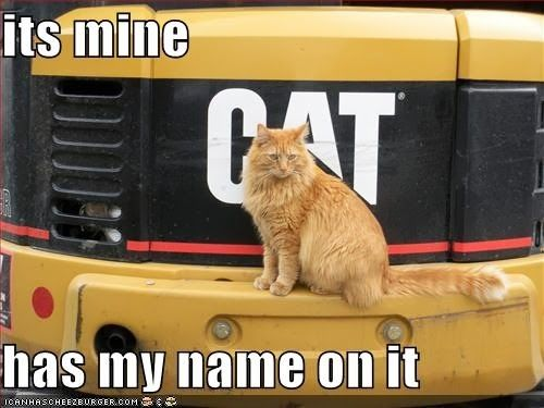 Cat Humor | It must be mine 'cause it has my name on it!