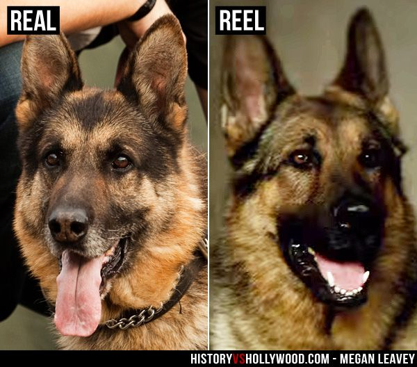 The Real Sergeant Rex Vs The Megan Leavey Movie Dog Learn More About The Real Story And The Real German Shepherd Who Inspired Military Dogs Megan Leavey Dogs