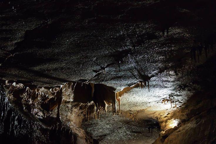Mystery Cave Tour in Preston, Minnesota