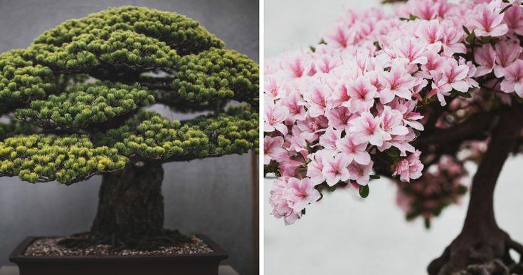 Me pasó 2 años Capturando la belleza de los árboles Bonsai | aburrido Panda