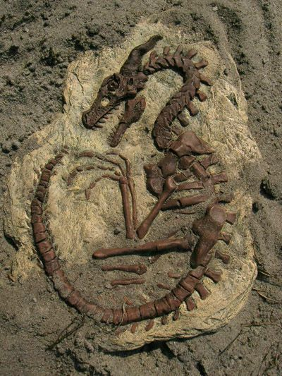 Dragón fósil por AtomicTerrier