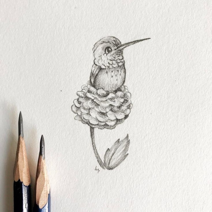 Mini #hummingbird! We've had a pack of them flying around the backyard and fighting for all the new blossoms. Some are sooooo cute and small! . . . #cutecharacters #characterdesign #funcharacters #charactersketches #characterart #drawing #graphite #tinydrawing #animaldrawing #bird #pencils #pnwcreatives #drawingoftheday #illustratorsofinstagram #graphitedrawing #graphiteart #100dayproject