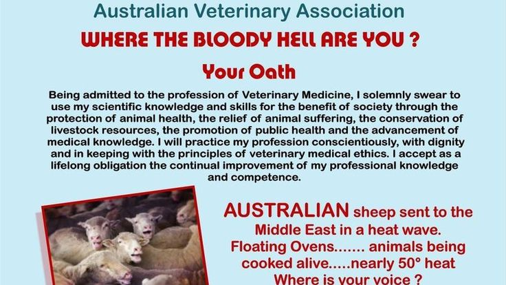 Petition · Australian Sheep 'desperately' need the Australian Veterinary Association to be their voice right now. So why is this association doing nothing. · Change.org