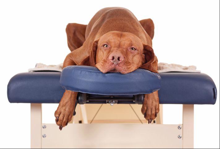 La chiropratica è una tecnica terapeutica manuale fondata sulla manipolazione della colonna vertebrale, degli arti e del cranio. Lo scopo delle cure chiropratiche è di massimizzare la mobilità tra due segmenti articolari e ottimizzare il sistema neuromuscolare, che è alla base dell'attività locomotoria.
