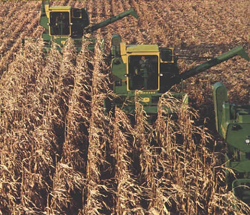 group of old 95 combines in corn.