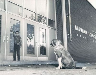 A boy's dog has followed him to Burnham Elementary (1903 E 96th) on the first day of school, 1953, Chicago.