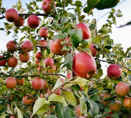 Favourite Local U-Pick Farm: Willow View Farms #WeHeartLocal
