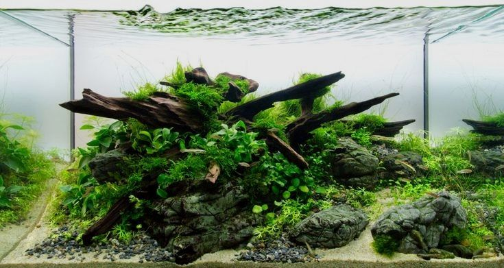 Aquarium Driftwood Types Finding Aquariumdriftwooddecor Aquarium Driftwood Aquascape Fish Tank Decorations