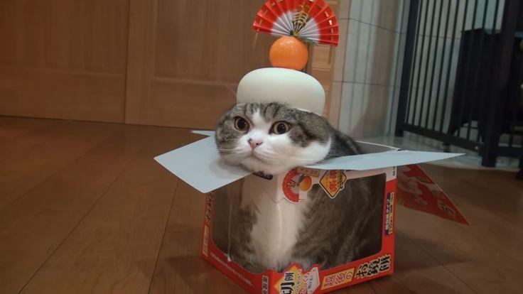 鏡餅の箱に入った猫に、お餅をかぶせてみたら・・・→可愛すぎる動画をご覧ください – Hash [ハッシュ]
