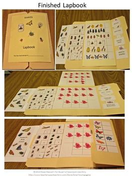 INSECTS MATH/LITERACY LAPBOOK AUTISM,PRESCHOOL, KINDERGARTEN, SPECIAL EDUCATION - Most students love a hands-on approach to learning. A lapbook is a great hands on project. The activities in this Insect Lapbook are common core aligned.