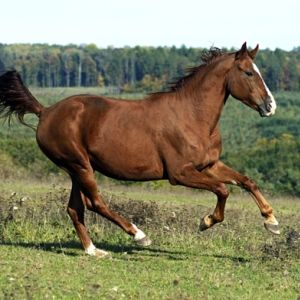 What's The Difference?  Trot, Canter, Gallop   http://rancholascascadas.com/whats-the-difference-trot-canter-gallop/