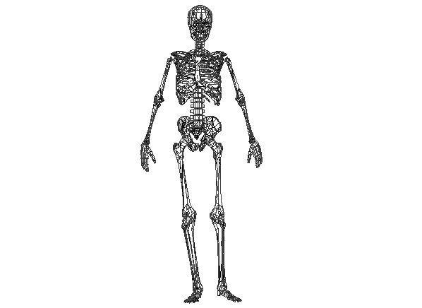 342 best papercraft images on pinterest | papercraft, paper models, Skeleton