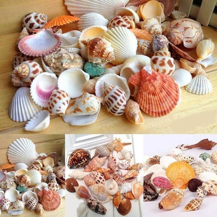 Natural Muschelmix Muscheln SeaShells Schnecken maritime Dekoration Basteln | eBay