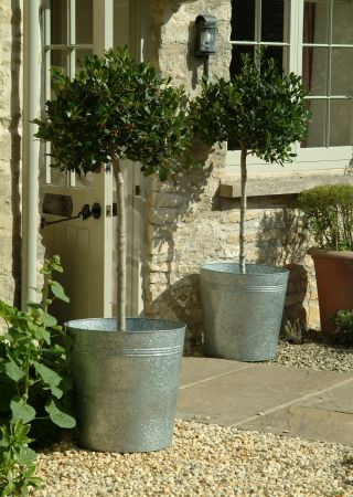 Galvanised Planters | The Balcony Gardener