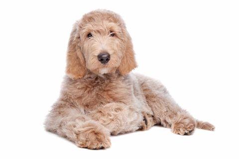 De ziekte van Addison is een goed te behandelen hormonale ziekte. De gemiddelde hond is bij de diagnose 4 jaar (var. 4 maanden - 12 jaar).