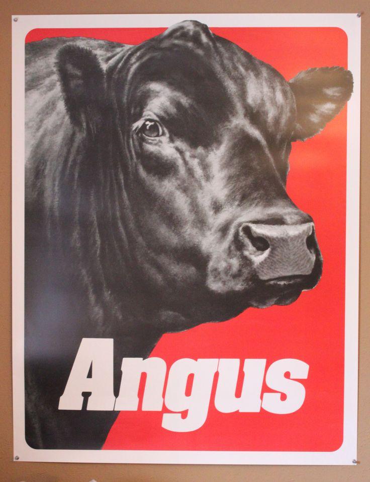 Black Bull Angus | Aberdeen Angus