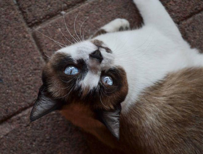 Le chat peut souvent être sujet à des allergies alimentaires. Ces allergies peuvent s'exprimer de différentes façons comme des…