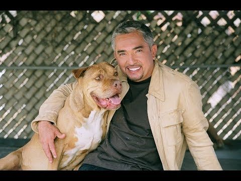 The Dog Whisperer | Season 6 Episode 1 | Full Episode - How to raise the perfect dog.