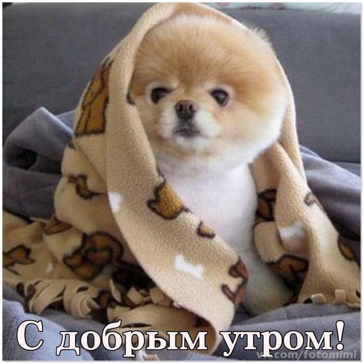 опередившего картинки с собакой доброго утра настоящий