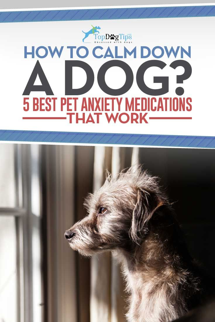 Top 5 Best Dog Anxiety Medication for Calming Dogs. The reason for anxiety problems in dogs are varied. Some may just be simply hyperactive, while others may suffer from excessive fear. Triggers could be anything from other dogs to gun blasts or any number of other stimuli. In here we list five options of best dog anxiety medication we have gathered for overly distressed dogs. #dogs #doganxiety #pets #anxiety #dogmeds #medicine