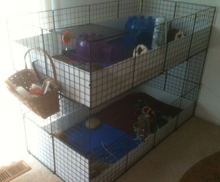 17 best images about guinea pig cages on pinterest cavy for Guinea pig cages for two