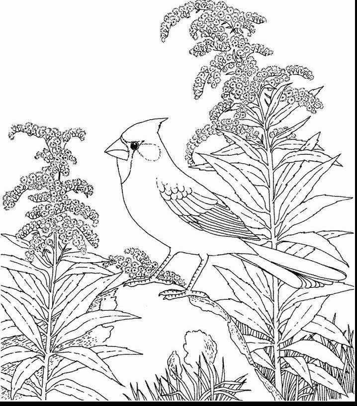 Ohio State Bird Coloring Pages Page Bird Coloring Pages Flower