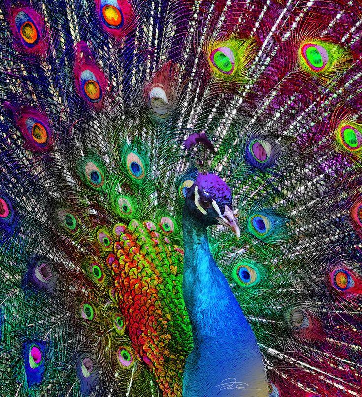 FunMozar – Peacock