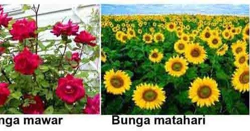 Gambar Struktur Bunga Tidak Sempurna Apa Yang Sebenarnya Membedakan Struktur Bunga Sempurna Dan Tidak Sempurna Bunga Tidak Sem Di 2020 Bunga Pernikahan Bunga Gambar