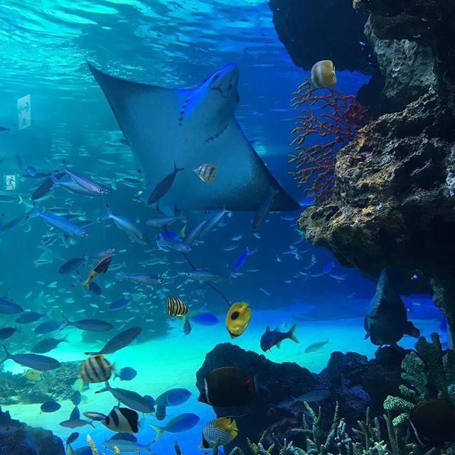 【arcoiris_kimaboo】さんのInstagramをピンしています。 《先月の誕生日! 友達がデート誘ってくれましたー‼︎ 水族館からのプラネタリウム^ ^ 理想のデートプラン♡笑 楽しかった〜^ ^ #水族館 #プラネタリウム #池袋 #サンシャイン #アクアリウム #aquarium #planetarium》