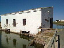 El Molino de El Pintado es el principal y mejor conservado molino de mareas de la provincia de Huelva y está situado en el Paraje Natural Marismas de Isla Cristina. Alcanzó su esplendor a mediados del siglo XVIII gracias a su compra por el mecenas e indiano ayamontino Manuel Rivero González.