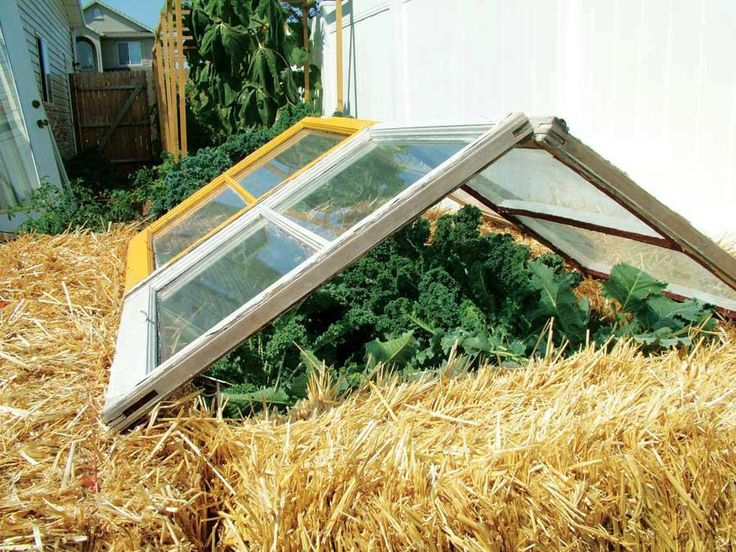 With a couple of old windows and a few straw bales you can create a mini-greenhouse/cold frame.