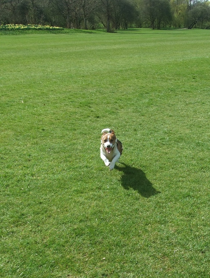 Kobi running