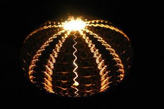 Image result for Aristotle's Lantern