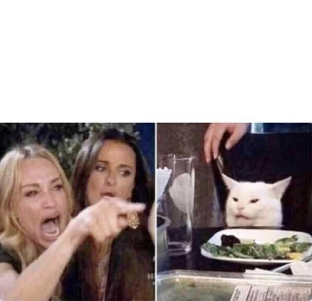 Woman Yelling At A Cat Meme Template Cat Memes White Cat Meme Meme Template