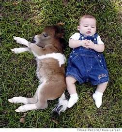 The smallest horse I've ever seen.....