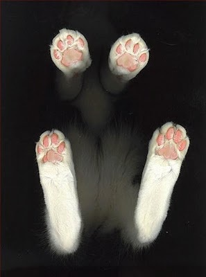 Cat Feet: To, Cat Photography, Cat Paw, Funny Cat, Kittens, Catpaw, Jelly Beans, Kitty, Animal