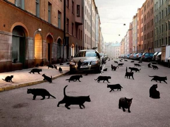norge cat people oslo