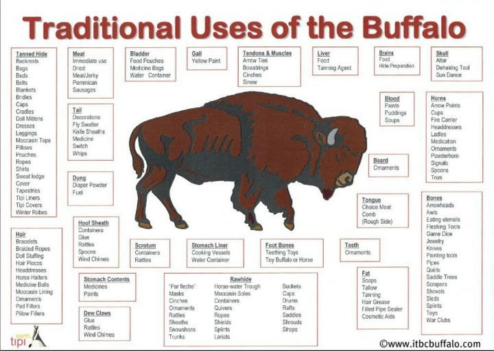 use of buffalo by the native The plains natives used buffalo for many different things, depending on what tribe you are talking about but a good, general overview of the plains natives usage of the buffalo are as follows .