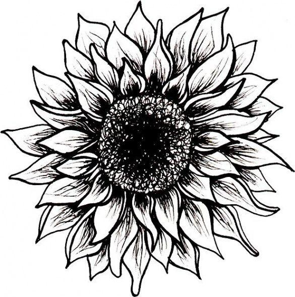 Five Quick Tips Regarding Sunflower Tattoo Meaning Black And White Sunflower Tattoo Meaning White Sunflowers Sunflower Black And White Sunflower Drawing