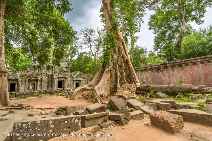 Ta Prohm is a temple of towers, closed courtyards and narrow corridors. Many of the corridors are impassable, clogged with jumbled piles of delicately carved stone blocks dislodged by the roots of long-decayed trees. Bas-reliefs on bulging walls are carpeted with lichen, moss and creeping plants, and shrubs.