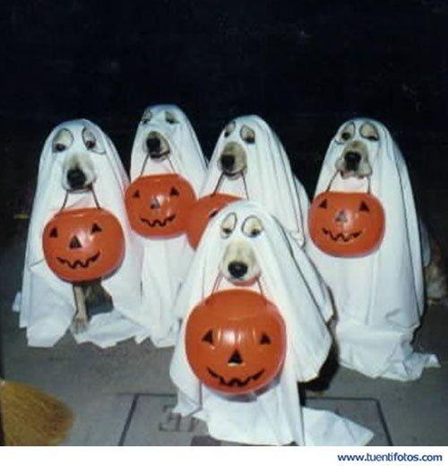 Animales de Perros Disfrazados De Hallowen