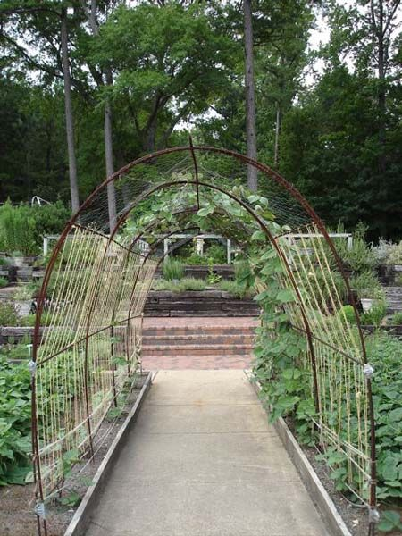This bean arch made from rebar supports twine and chicken wire for pole beans to climb. The concept is from the vegetable garden at the Birmingham Botanical Gardens vegetable display in Alabama, but it can be adapted to any home garden. Cucumbers would like this system, too. When fully covered, arches like this make a great garden house to the delight of children of all ages.