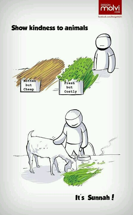 Sunnah - show kindness to animals. Islam