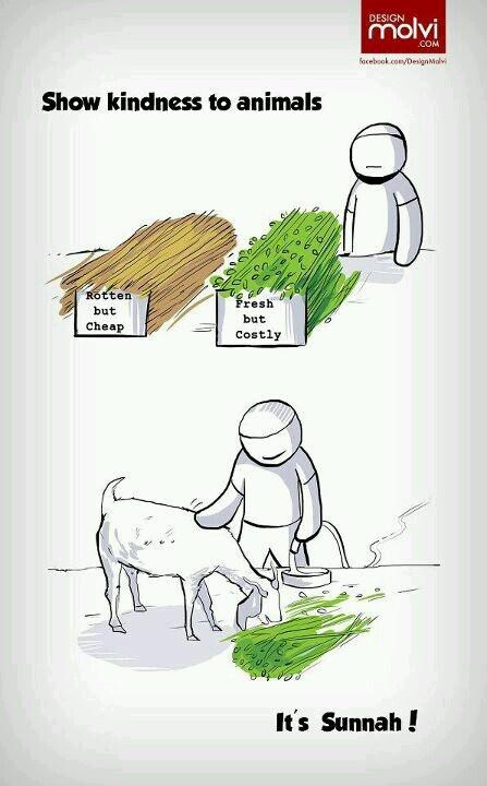 Sunnah - show kindness to animals. Islam