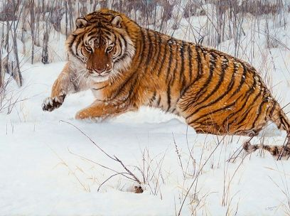 """Original Oil Painting """"Cat and Mouse"""" by John Banovich - beautiful tiger in snow!"""