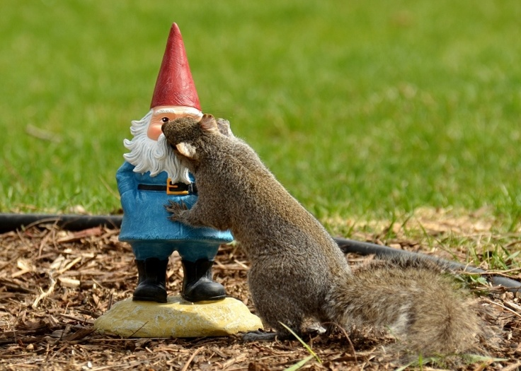 Funny Gnomes: Squirrel Loves Gnome. Smoooooch!